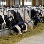 Qatari dairy company battling Arab boycott to go public next yearQatari dairy company battling Arab boycott to go public next year