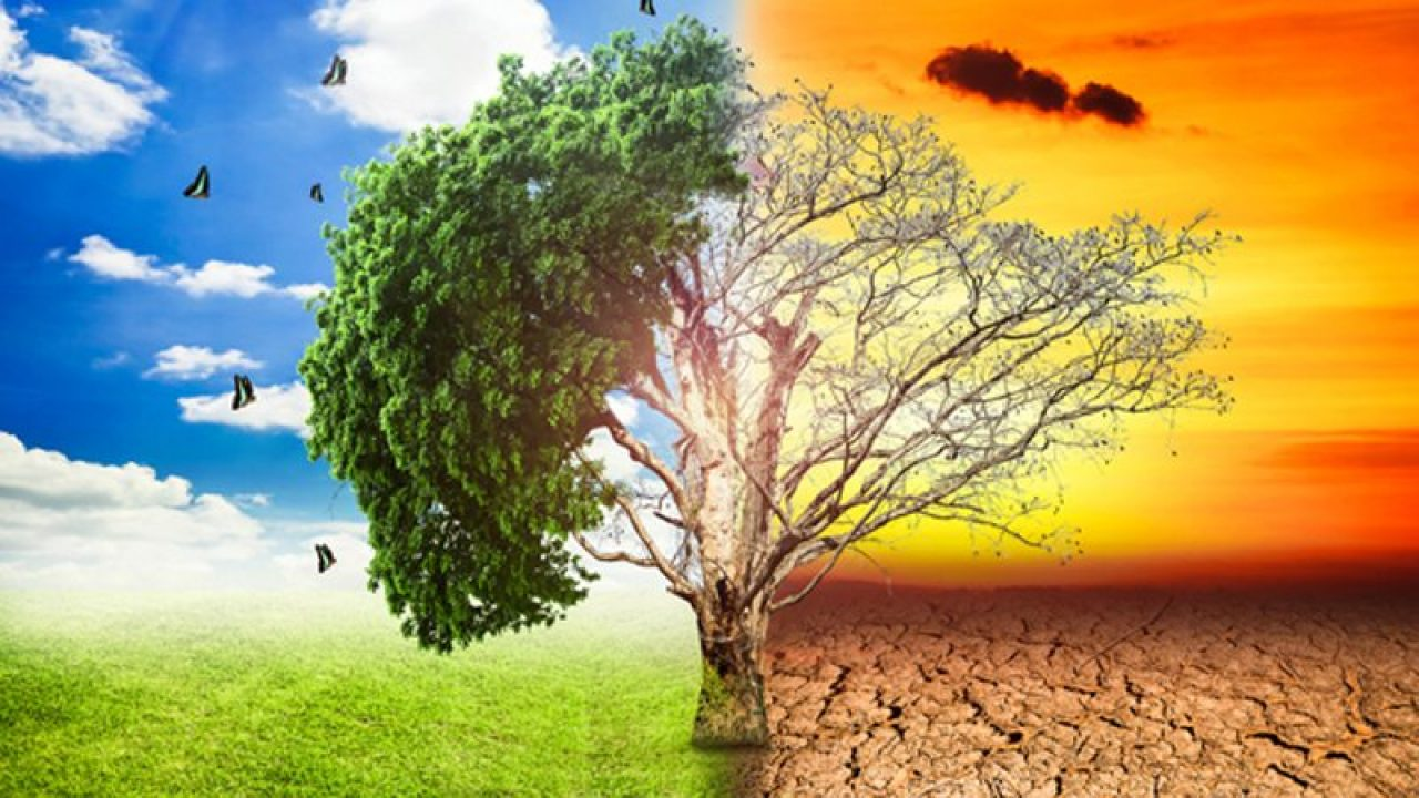 The green economy of Pakistan -  Daily Times