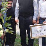 'Tree plantations vital for eco-friendly future'