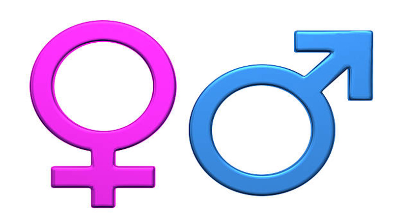 Male Or Female Who Determines A New Borns Gender -4301