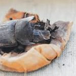 Archaeologists in Egypt discover rare collection of mummified scarab beetles