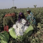 Women trade unions vow to protect rights of cotton workers
