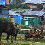 Rohingya rejection ruins Bangladesh repatriation effort