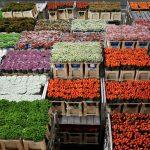 Brexit could wilt huge Dutch flower trade