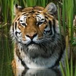 Let's stand up for the protection of  endangered animals in Pakistan