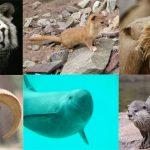 EXTINCTION OF WILDLIFE SPECIES IN PAKISTAN