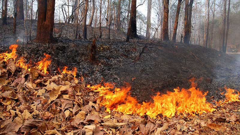Brazil rejects Sh2bn G7 aid to fight Amazon wildfires