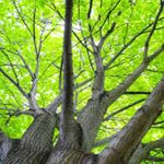 Trees and greenery — mother nature at her best