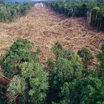 What deforestation is doing to our country