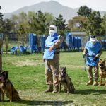 Man's best friend: the dogs who sniff out explosives in Kabul
