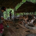 Dharma Dogs: Buddhist chants calm stray Myanmar mutts