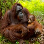 Forest animal populations have plummeted by half since 1970: WWF report