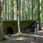 Ghostly Nazi-era motorway resurfaces in German forest