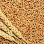 Wheat exports reduces 88.10% in four months