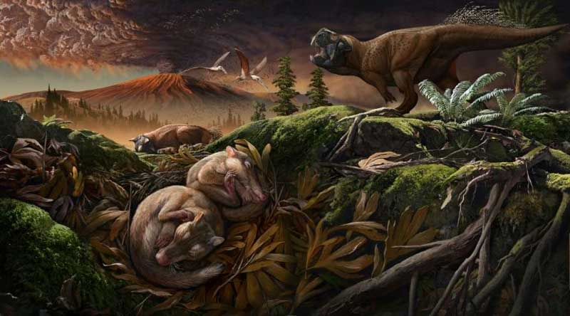 New fossils reveal how mammals became good listeners