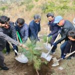 'Pakistan-Korea Friendship Forest' launched in KP