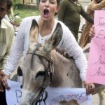 Pakistan and the woes of equine animals