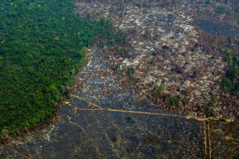 Deforestation in Amazon jumps 100% in November over same month previous year