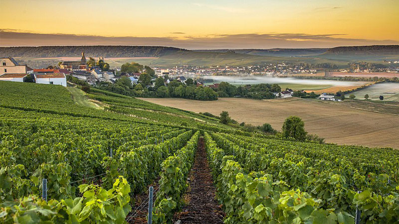 The ultimate French weekend getaway? A grand tour of the Champagne region