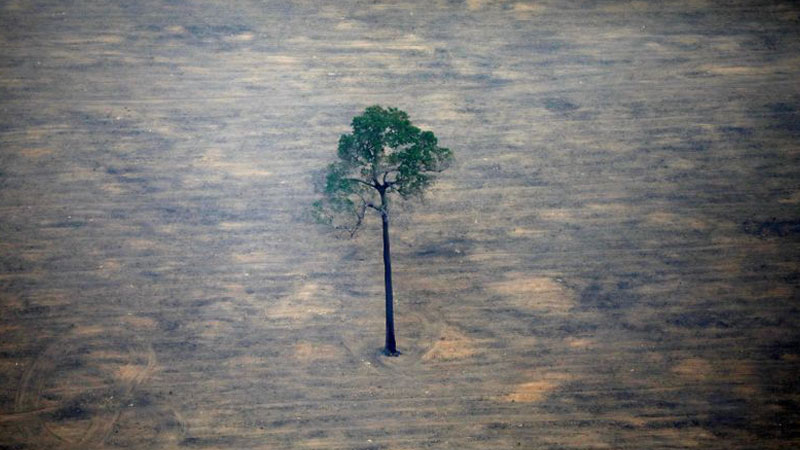 Brazil Amazon deforestation climbs more than 100% in November over same month last year