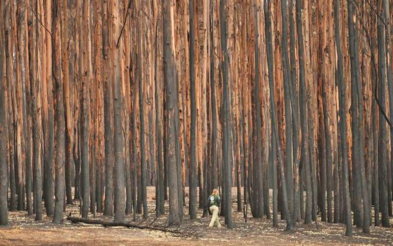 Rain hits Australian fires, but blazes still rage