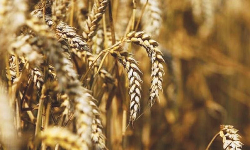 ECC approves duty-free import of wheat