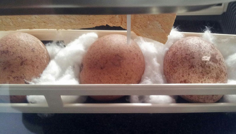 'Pablo Escobar of eggs' faces justice after 35 years of poaching