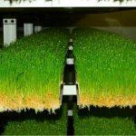 Regaining Soil Fertility through Growing Green Fodders