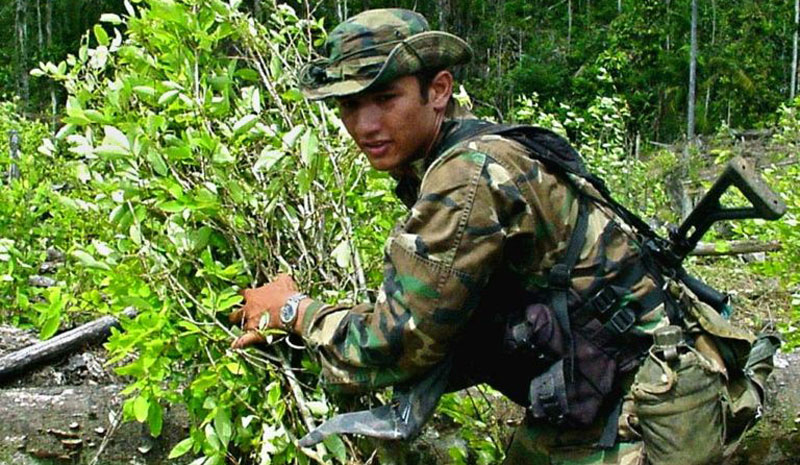 Colombia destroys record amount of coca leaf plantations
