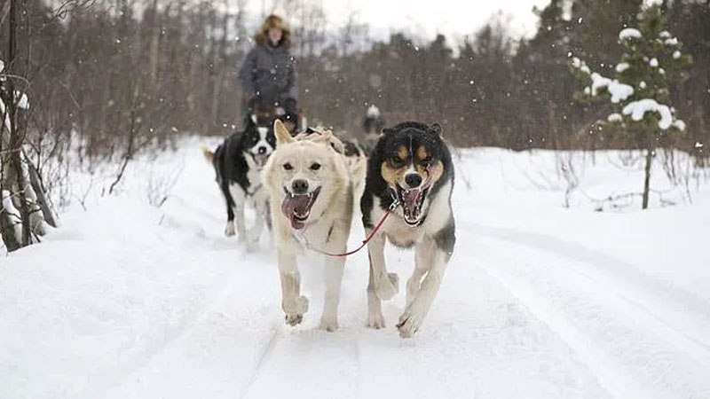 Norway's natural highs — cross-country skiing and husky sledding are hard work