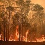 Bushfire crisis hit 75% of Australians: survey