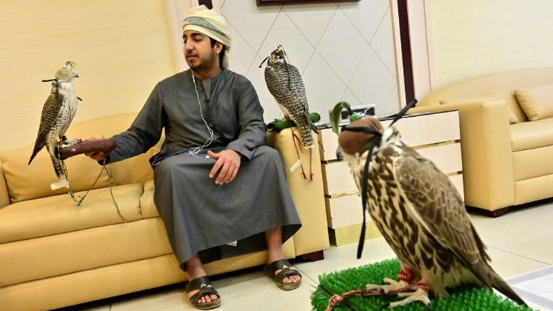 UAE falcon hospital a window into Emirati tradition