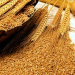 Punjab increases wheat quota for mills by 2,500MT per day