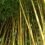 Why bamboo is one of the hottest ingredients in Korean beauty products
