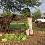 Coronavirus upends global food supply chains in latest economic shock
