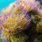 Great Barrier Reef suffers worst-ever coral bleaching: scientists