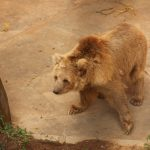 Bear going slowly insane in Bahria Town Zoo as it struggles to cope with 40C heat
