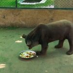 Black bear suffering from Zoochosis in Bahria Orchard Zoo rescued after Daily Times' report