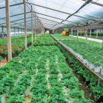 PCJCCI keen to promote Eco-Farming for increasing agricultural yields
