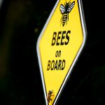 Even during pandemic beekeeping remains an essential service