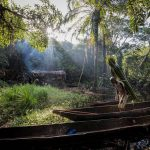 Central African states seek to make forests work for people and planet