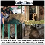 Two former dancing bears from Marghazar zoo to be relocated to a sanctuary in Jordan