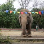 PM's aide Malik Amin says Kaavan arrives 'safely' Cambodia for happier life ahead