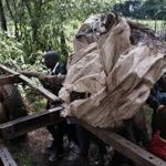 Kenyan farmers and young guides enlisted to protect city forests