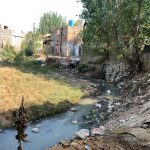 Life beside the waste water streams