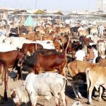 Revolutionary steps being taken to enhance production of milk, meat