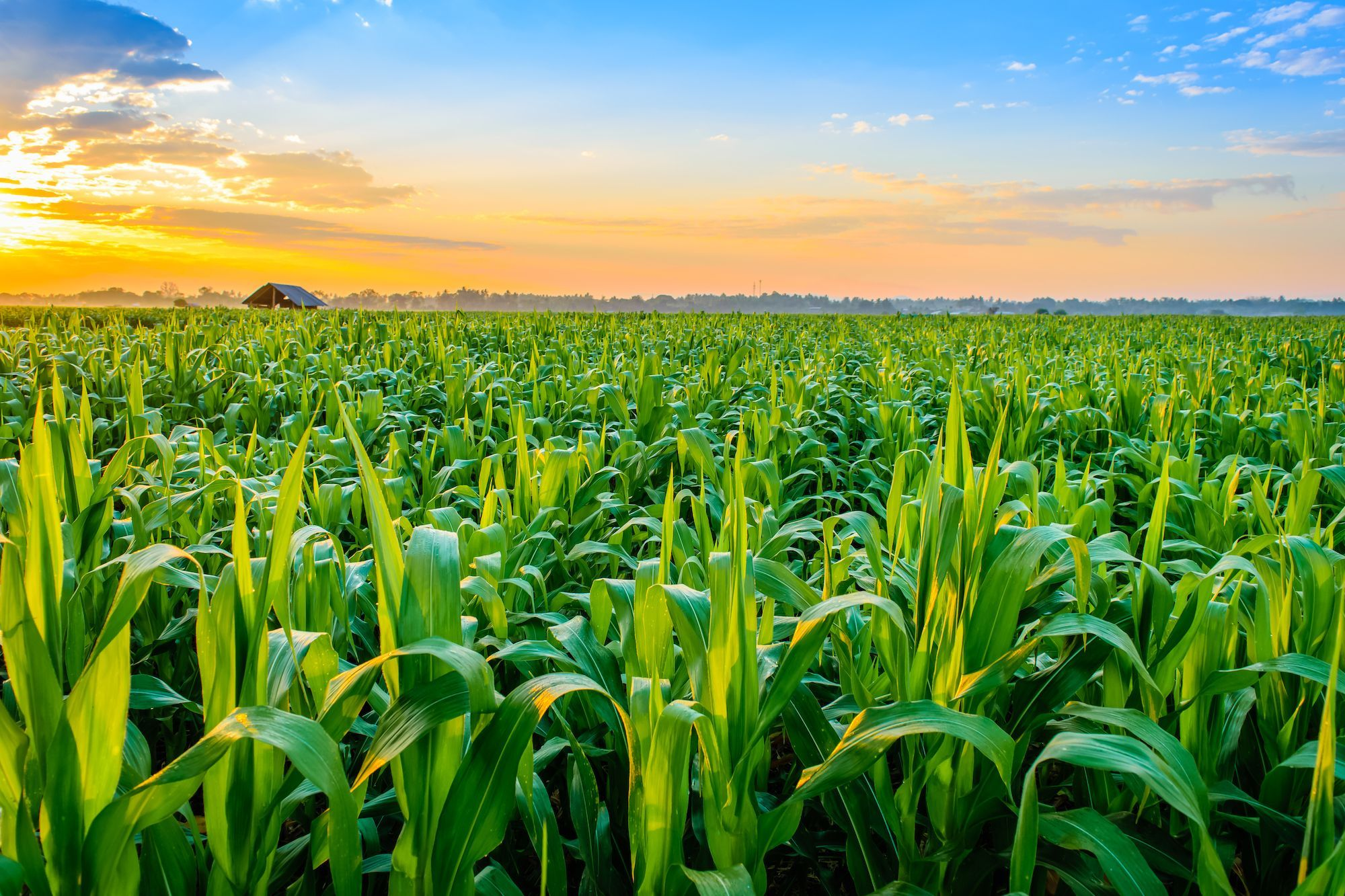 Agriculture sector witnessed 2.77% growth, livestock 3.06% in FY 2020-21