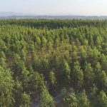 Ten Billion Tree Tsunami Plantation
