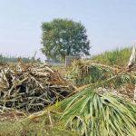 Punjab Sugar Factories Act