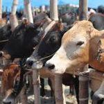 Port city witnesses record sale of sacrificial animals